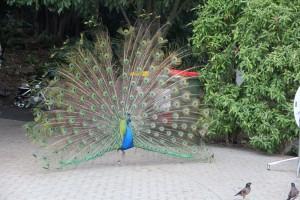 Zoo 13