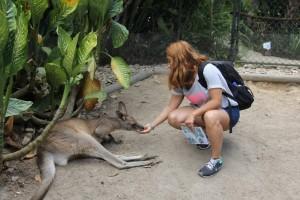 kangooro