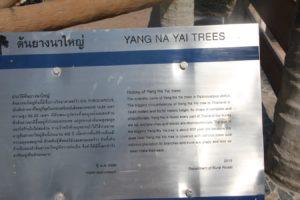 yang-na-yai-agaci